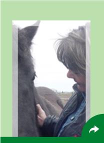 Terapi læring med heste