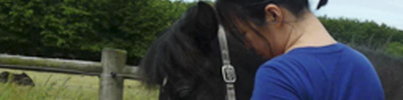 Hesteterapi