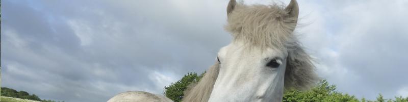 hest udenrytter