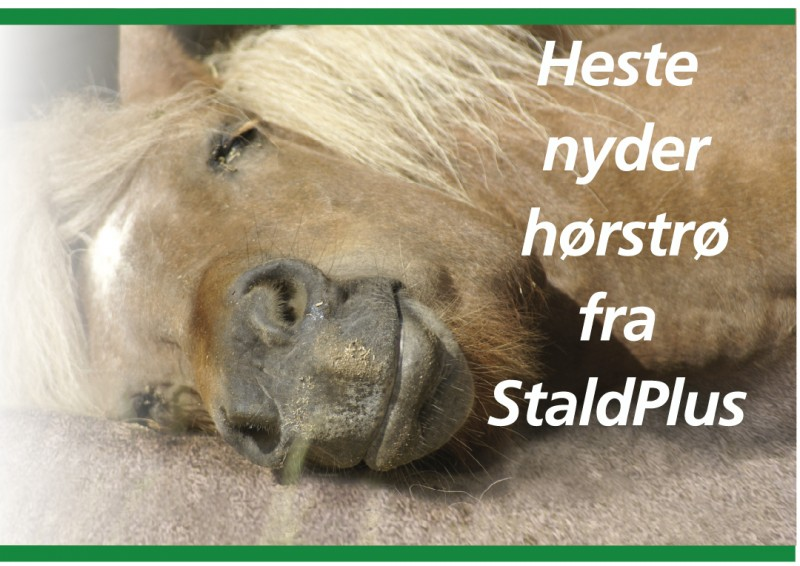 hestihoer