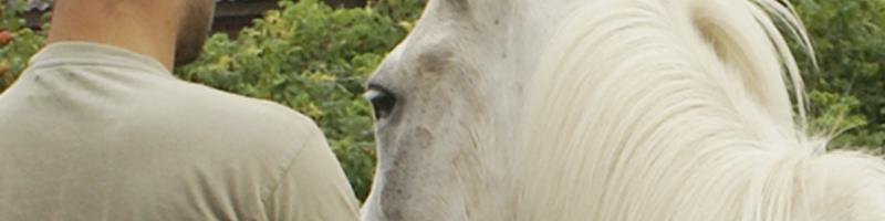 Terapi med heste